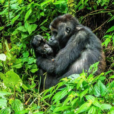 Promotion de la biodiversité et conservation de la nature